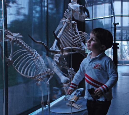 Museum © Chloé Sabatier