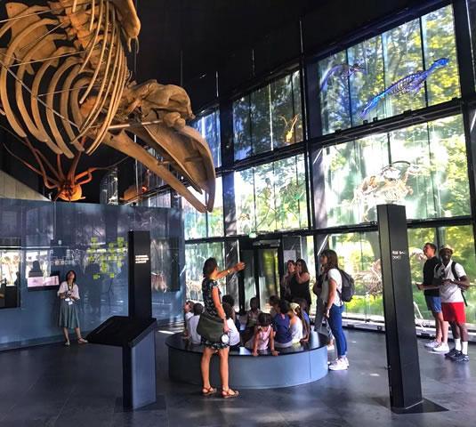 Le Muséum de Toulouse : à faire avec les enfants !